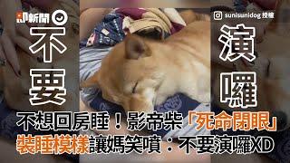 柴犬不想回房睡!「死命閉眼叫不醒」媽笑噴:不要演囉|寵物動物|柴柴|薯妮一坨泥
