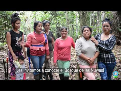 Conociendo el Bosque de las Nuwas
