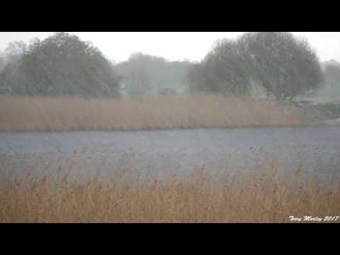 The Yorkshire Wildlife Trust  Staveley