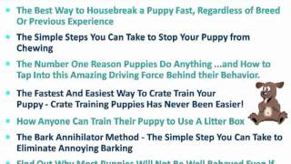Puppy School Training, Yorkie Puppy, Puppy Potty Training