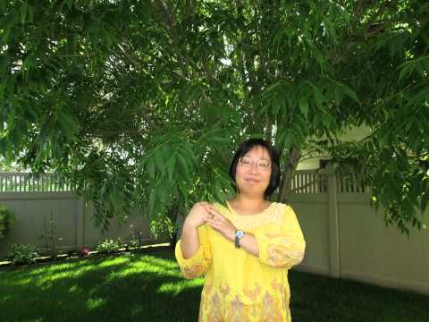 Teresa Huang 1