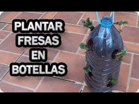 Como Plantar Fresas En Botellas Recicladas    Frutillas    La Huertina De Toni