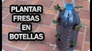 Como Plantar Fresas En Botellas Recicladas || Frutillas || La Huertina De Toni
