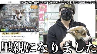 【リアル】韓国の保健所で○処分寸前の犬を保護しました。【コーギー犬】