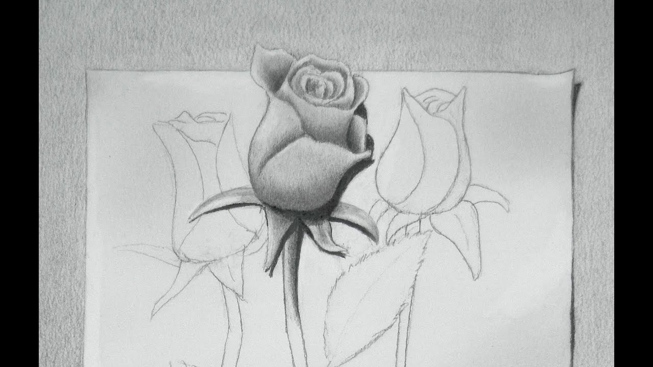 How To Draw A Rose Drawing Roses Youtube