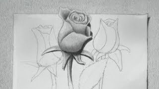 How to Draw a Rose - Drawing Roses