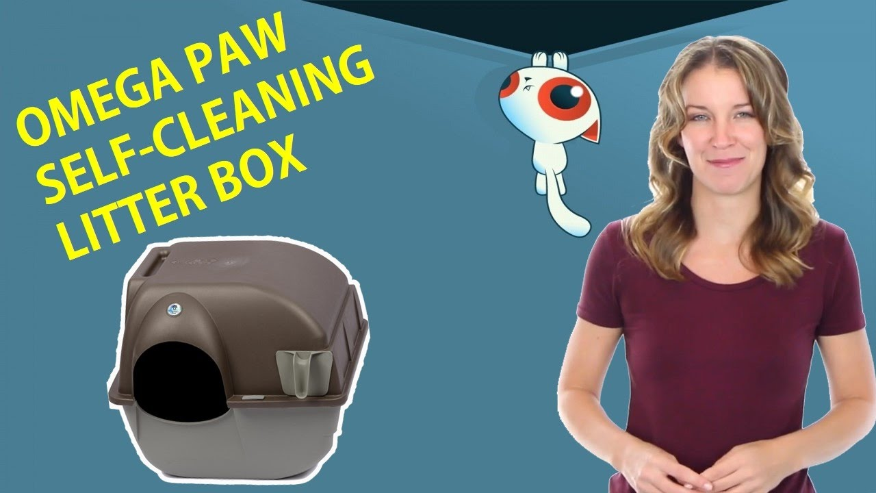how to clean a litter box youtube