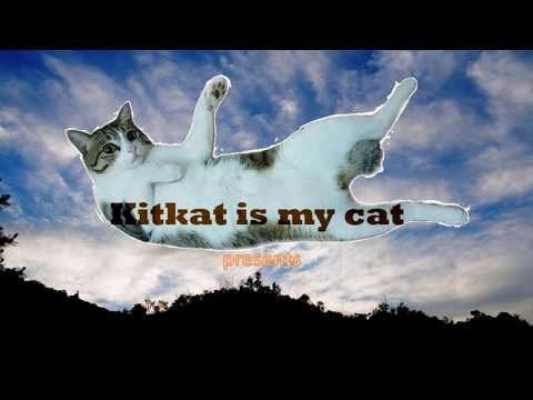 [Youtube Clips] Kitkat plays with his new cat-treat dispensing toy mouse