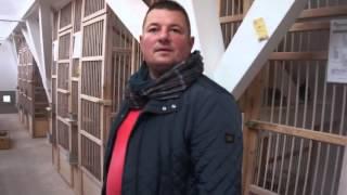 Dominik Palarski - gołębie na sprzedaż - prezentacja - 26.11.2015r.