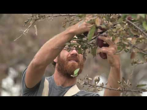 Local Producer Profile: Hoch Orchard and Gardens