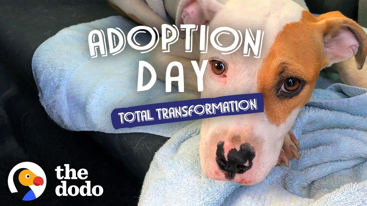Pup Found On The Side Of The Road Can't Stop Giving Kisses | The Dodo Adoption Day