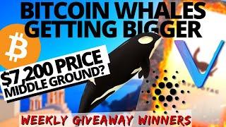 BITCOIN WHALES GROWING! Vechain HACK | Cardano Shelley | QUADRIGACX | Bitcoin and Crypto News