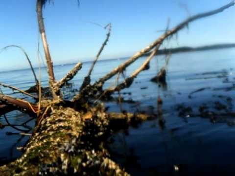 Underwater Film From McDowell Beach, Orcas Island, Washington