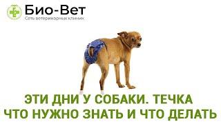 Эти дни у собаки. Течка что нужно знать и что делать. . Ветеринарная клиника Био-Вет