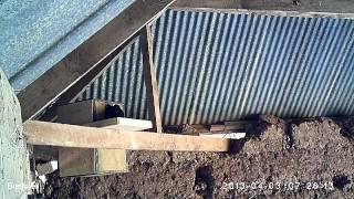 Jackdaw On Barn Owl Nest Box