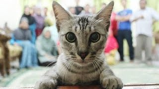 Эти забавные котики #4/This is Funny Cat(CatsLIVE)