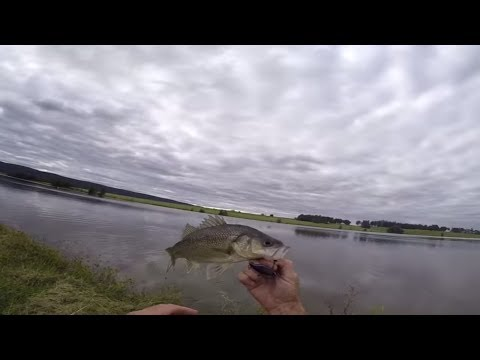 Sydney Bass Fishing Tips, Burning A Jackal TN 50 Over The Top Of The Weed Beds, PENRITH LAKES.