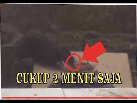 LIHATLAH REAKSI RAJA TIKUS INI SETELAH MAKAN RACUN TIKUS..!!  mice died after 2 minutes