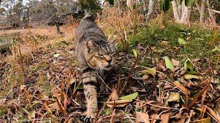 大雪後の公園、猫ハウスに閉じこもっていた猫たちがモフられに出てくる
