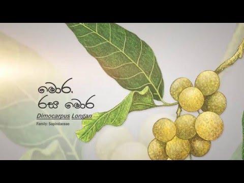 Sri Lanka Telecom - Longan (Wild Fruits)