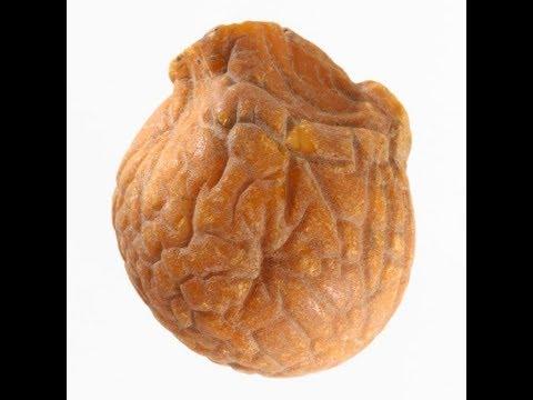 Что такое янтарная капля или янтарный мозг