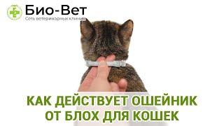 Как Действует Ошейник От Блох Для Кошек & Выбор Ошейника От Блох Для Кошки. Ветклиника Био-Вет