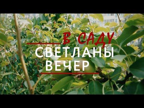 Подмосковье. Черешня в Сергиев Посаде
