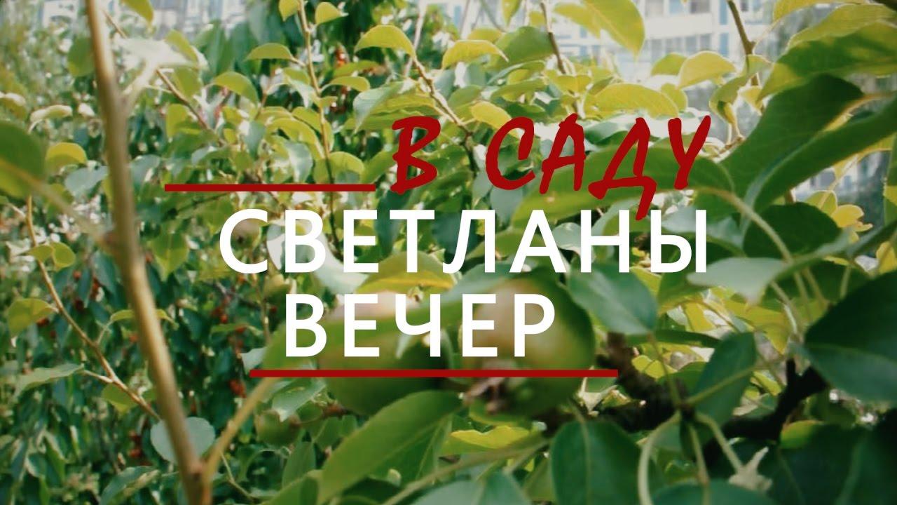 Считается, что xiv веке этот сорт яблок с балкан через молдову и украину попал в центральную часть россии, где получил название «апорт александра» (в честь царя). В 1865 году в окрестности верного (будущая алма-ата) саженцы «апорта александра» привез переселенец из воронежской губернии.