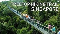 Treetop Walk Hiking Trail | Singapore Macritchie Reservoir