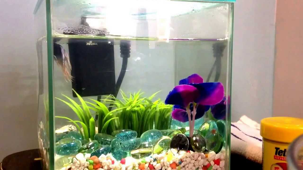 Betta fish tank tour youtube for Betta fish tanks for sale