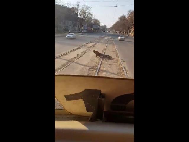 В Самаре мужчина отжимался на рельсах перед идущим трамваем