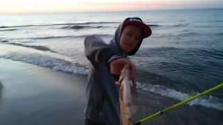 Ryby z Bałtyku -Leszcz,płoć,węgorz,okoń,flądra