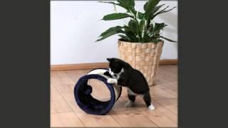 мягкая игрушка кошка своими руками