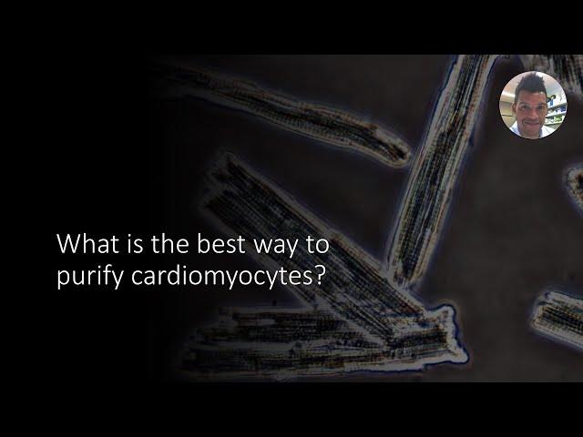 How to purify cardiomyocytes