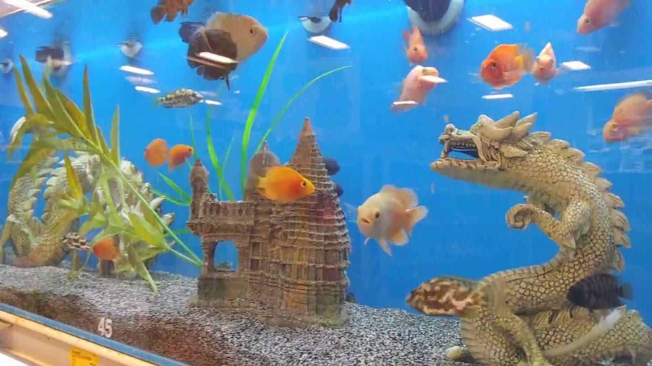 Fish Fish Fish Trip Through Petsmart Youtube