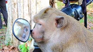 Funny Video King Mark Monkey In Mirror | What Funny King Monkey Mark!