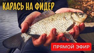 Ловля карася на фидер Снасти прикормка оснастка и насадка для рыбалки Прямой эфир