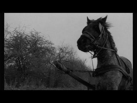 The Turin Horse Trailer
