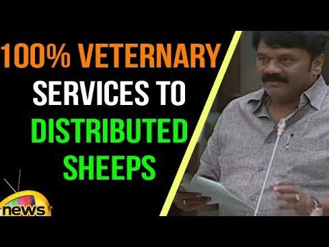 Talasani Srinivas Assures 100% Veternary Services to Distributed sheeps | TS Assembly | Mango News