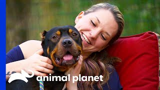 Potential Adopter Finally Reunited With Rescue Dog | Pit Bulls & Parolees