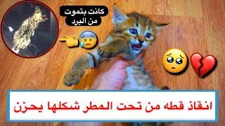 انقاذ قطه صغيره من تحت المطر 😱💔 كانت بتموت من البرد 🥶 شوفوا ما اجملها 😍/ Mohamed Vlog