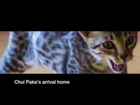 Chui Paka Arrives Home