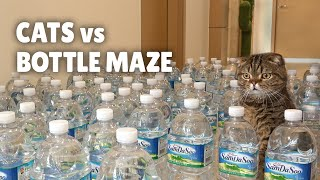 Cats vs Bottle Maze