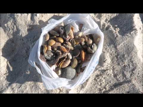 Saturday Shelling at St Andrews State Park Dec 12 2015