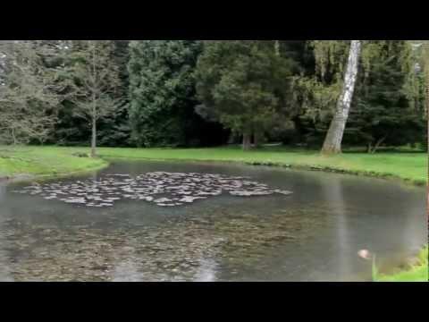 Universität Hohenheim - Exotischer Garten