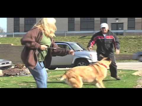 mr.o-aggressive-dog-training