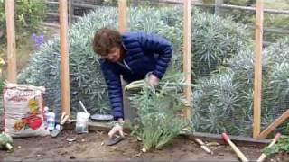 Planting Artichokes with Pat Welsh