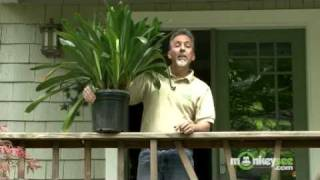 May Gardening Tips - Moving Houseplants Outside