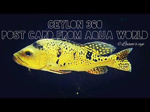 CEYLON 360 (Post Card from Aqua world Colombo)| By Xiaomi yi4k action camera | Travel video| by Laam