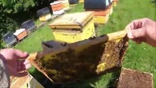 Пчелы зароились, как быстро с этим разобраться без последствий. Все в деталях.